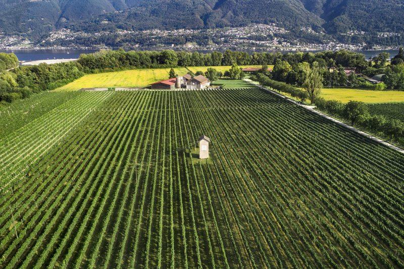 Castello del Sole: Landwirtschaft