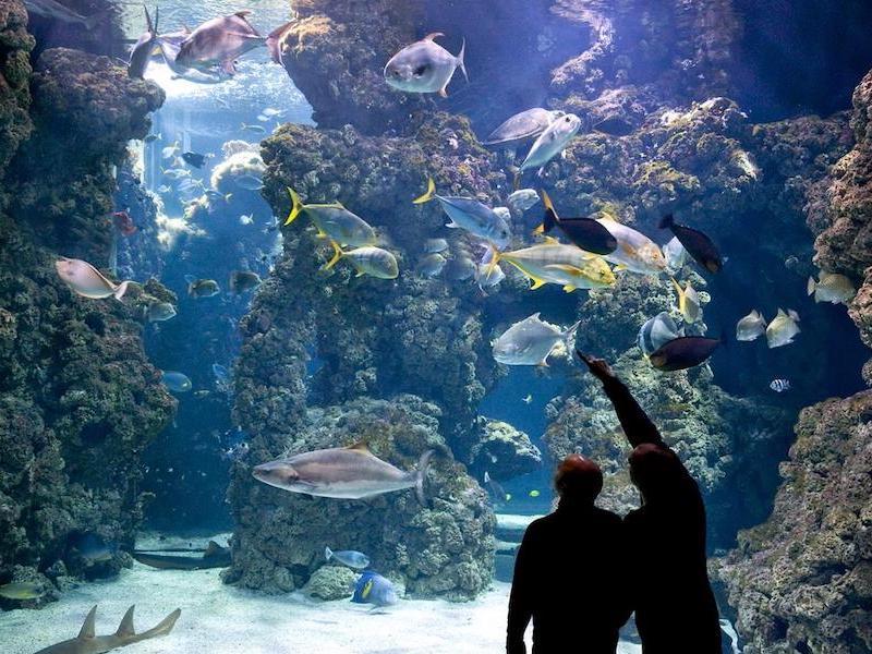 Monaco-Monte Carlo-Ozeanographisches Museum